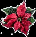 christmas-314923_1280.png