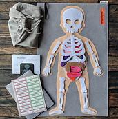 Felt Human Anatomy full set arranged_edi