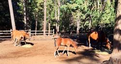 Foals 2017