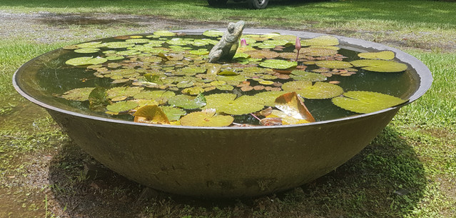 Sugar Kettle Water Feature with Frog Fountain