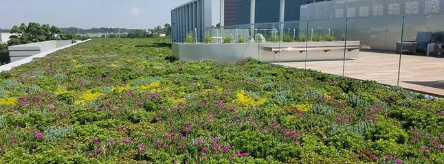 Vegetative & Garden Roofs