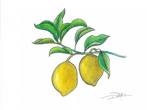 Lemon Plant #1