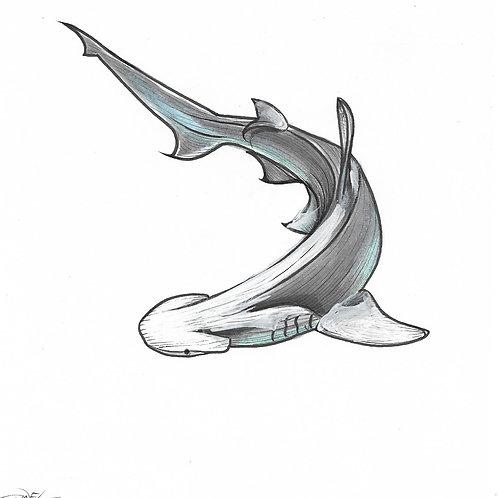Bonnethead Shark #1