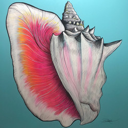 Conch Shell Painting on Canvas