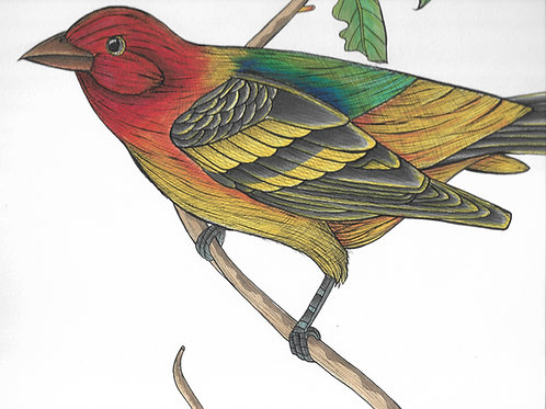 Tanager #1