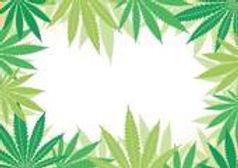 marijuana support research