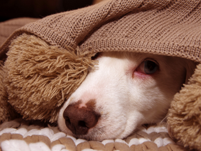 Do You Have An Anxious Dog?
