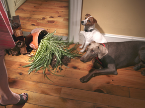 Does Your Dog Destroy Your Home?