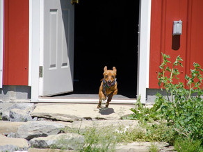 Is Your Dog Rushing Out The Front Door & Into The Dangerous Streets?