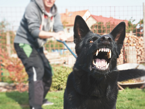 Is Your Dog Reactive On Leash?