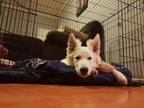 Crate Training Your Dog Or Puppy