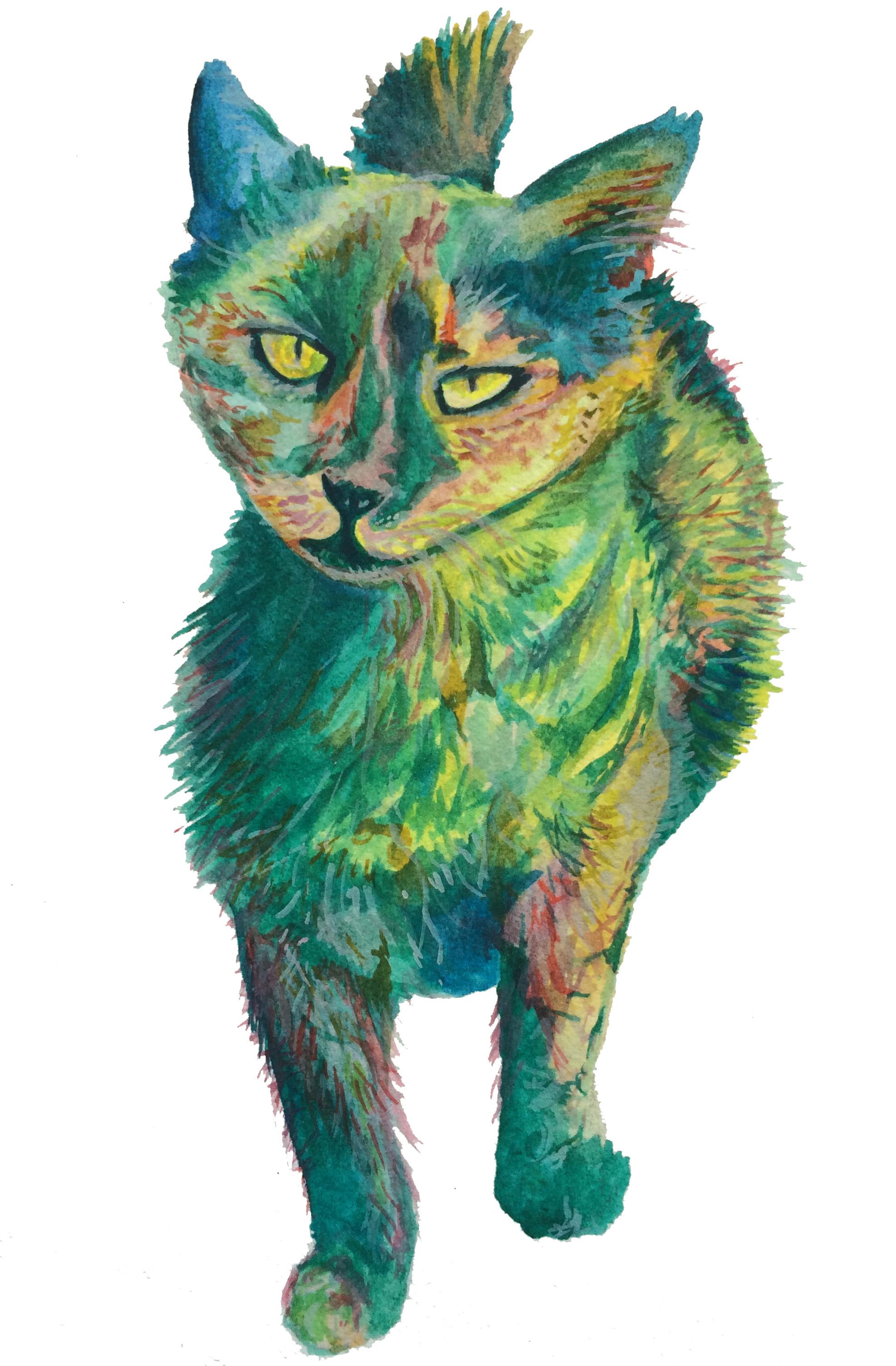 Jerusalem Street Cat