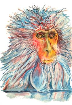 Japanese Snow Monkey from Baraka