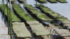 Manganas 01.jpg