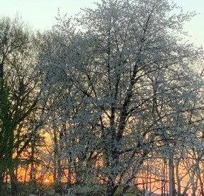 """Spring Sunset"""