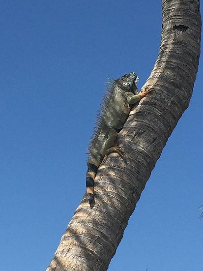 """Sunbathing, Grand Cayman Island"""