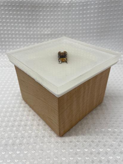 """Small Lift Lid Box """"Murder Hornet (White)"""""""