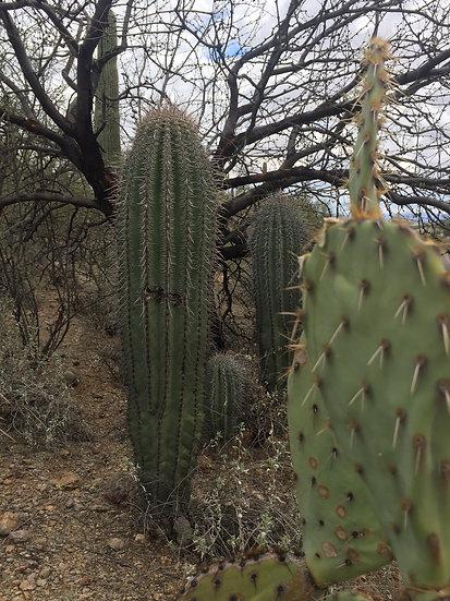 """""""Cactus Collage"""""""
