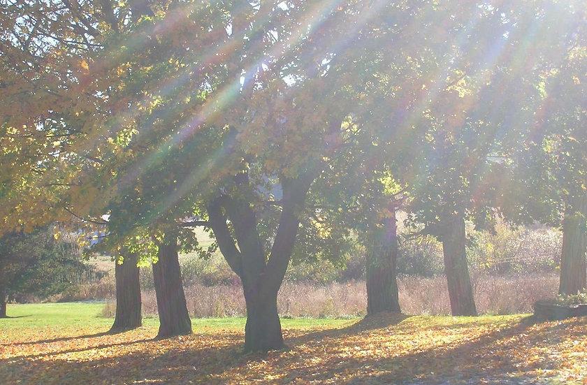 """""""Autumn Sunlight"""""""