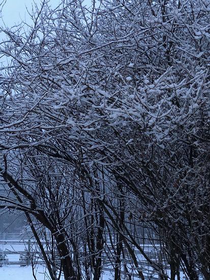 """""""Winter Calm"""""""