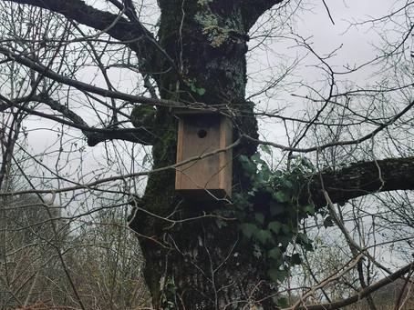 Protégeons les oiseaux de nos jardins & campagnes !