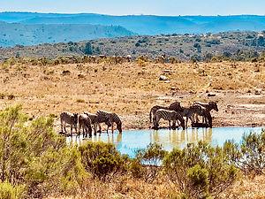 shamwari south africa eagles crag samantha sendor