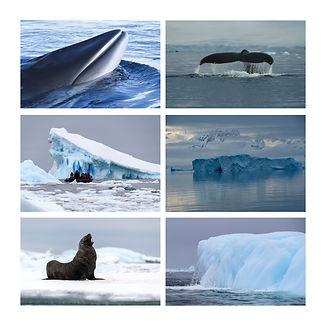 Antarctica Samantha Sendor Polar Latitudes