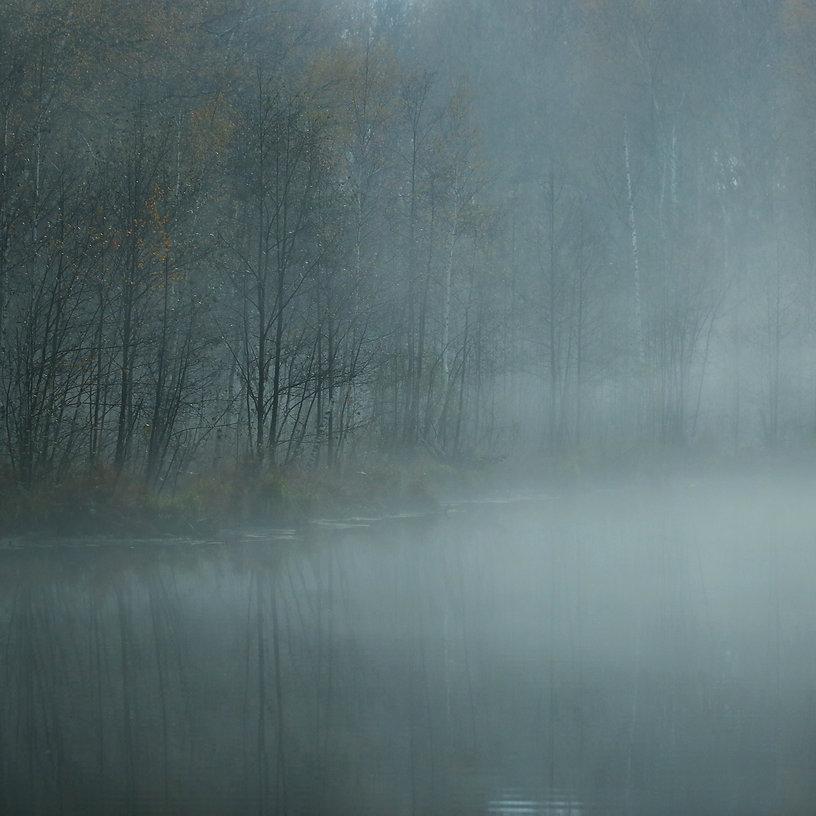 storyblocks-fog-under-water-near-forest_
