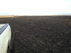 LPF Site 2 - Mahnomen Seed Bed Preparation, Fall 2014 (2).JPG