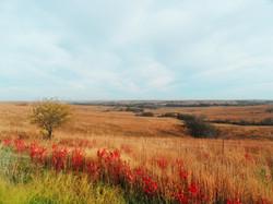 Fall Prairie 2.0
