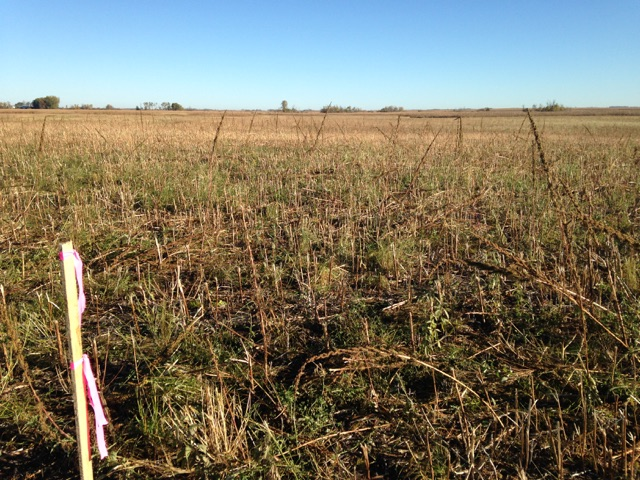 LPF Site 2 - Mahnomen Wetland Restoration Work, Fall 2014 (3).jpg