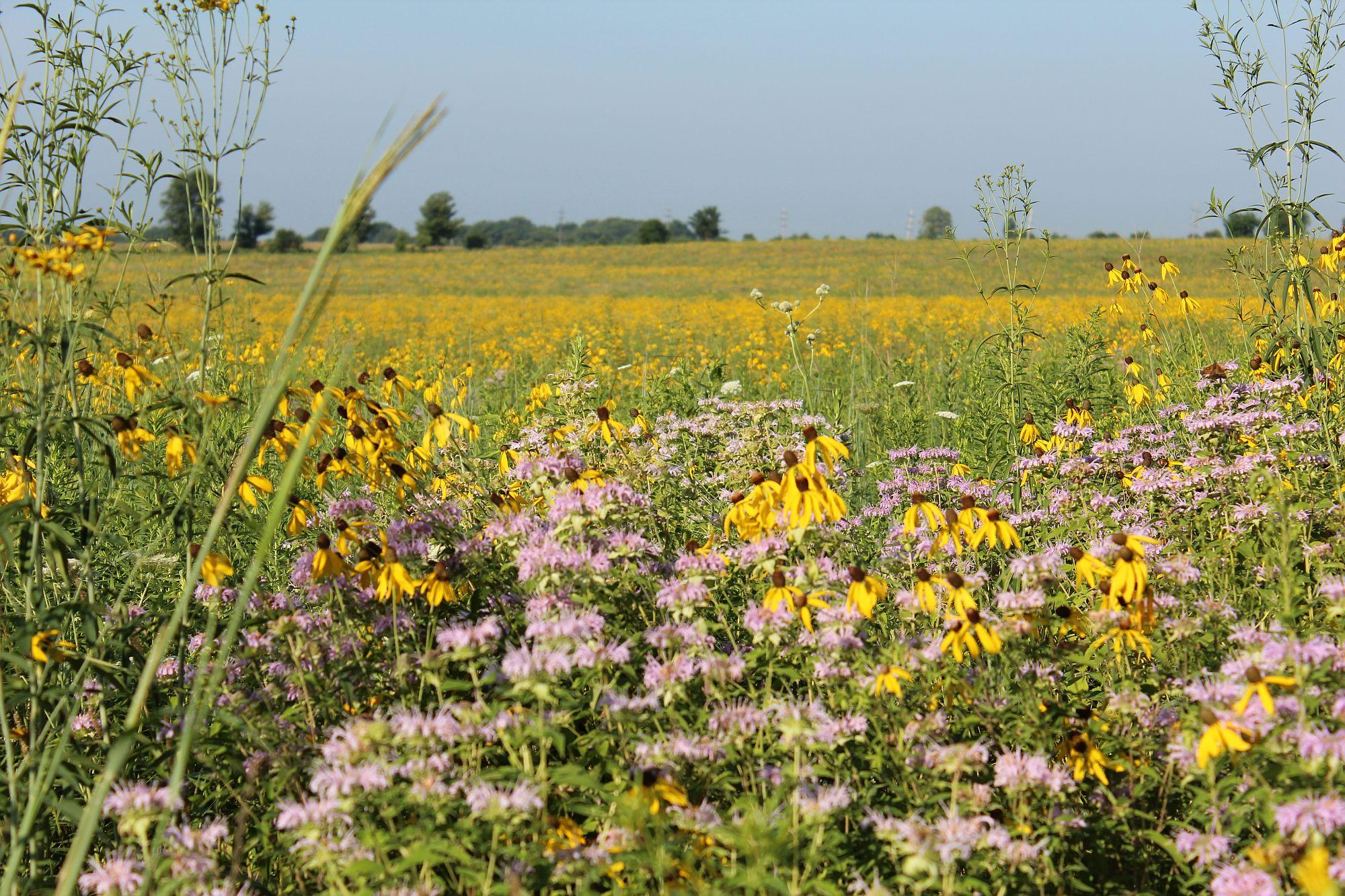 Prairie 9