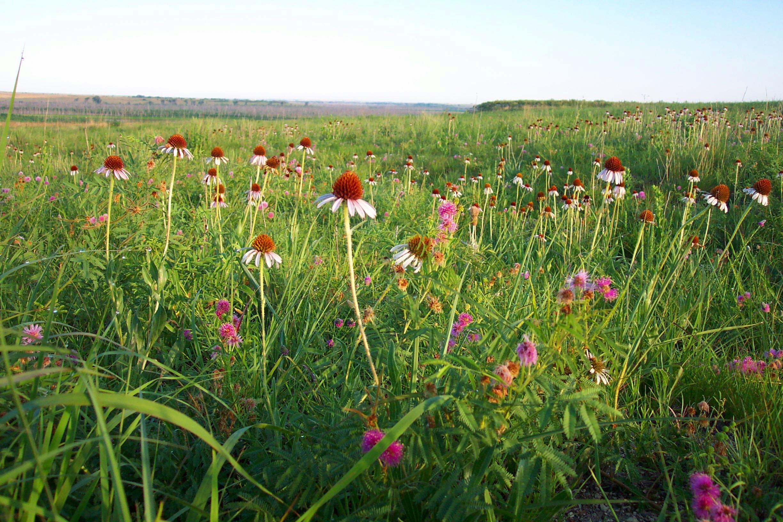 Prairie 15