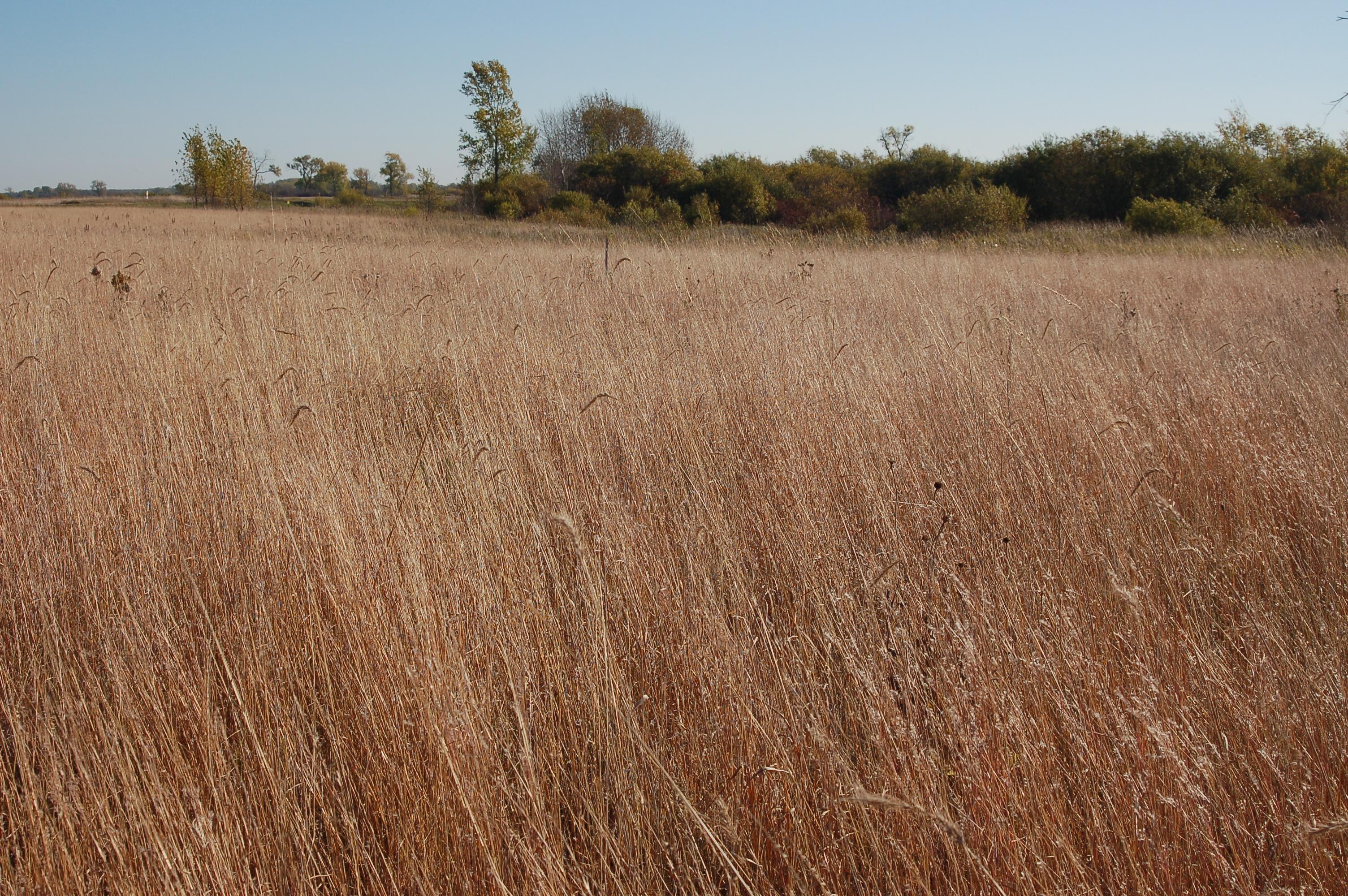 Mixed prairie, Ulen