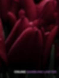 Schermafdruk 2020-06-22 17.15.47.png