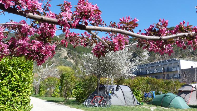 cyclo printemps .JPG