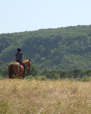 cheval, randonnée, sports activite, baronnies, residence***, camping***, buis, drome, provence, fonaine annibal