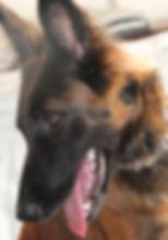Escola de cães, escola de cães cascais