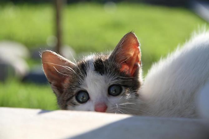 Eftermiddagsthe med kattbesök