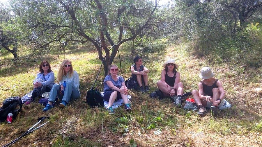 Matpaus i olivlund