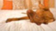 cachorro-deitado-640x360.png