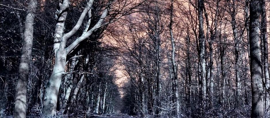 GCDO#01 - Elisabeth de Caligny - DOSSIER : L'étrange forêt de Cannock Chase