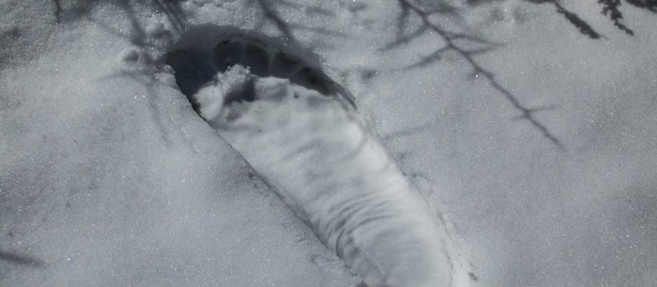 GCDO#02 - Marie Roca - Enlèvements d'humains par des Bigfoots (2ème partie)