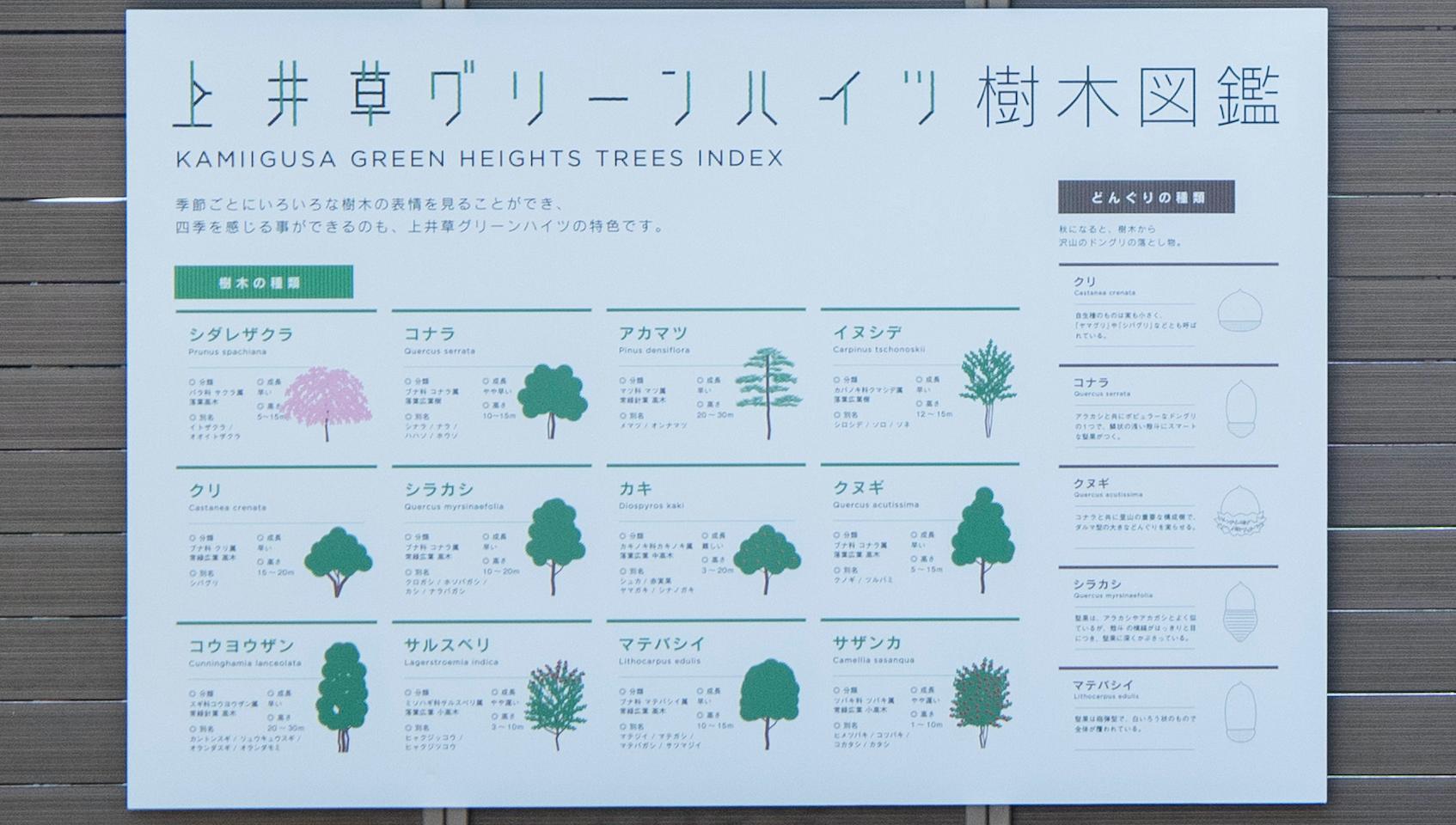 中庭サイン「樹木図鑑」
