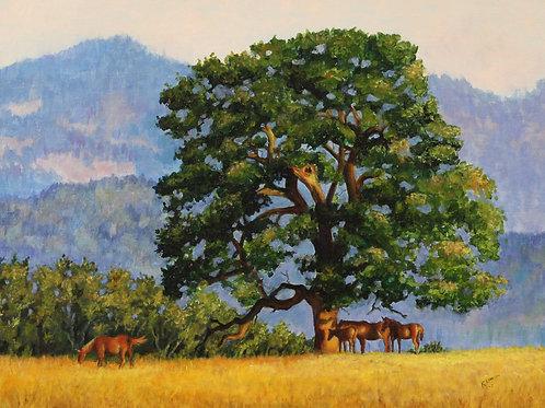 Wimberly Pasture