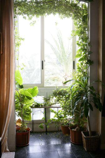 Sua casa com mais verde