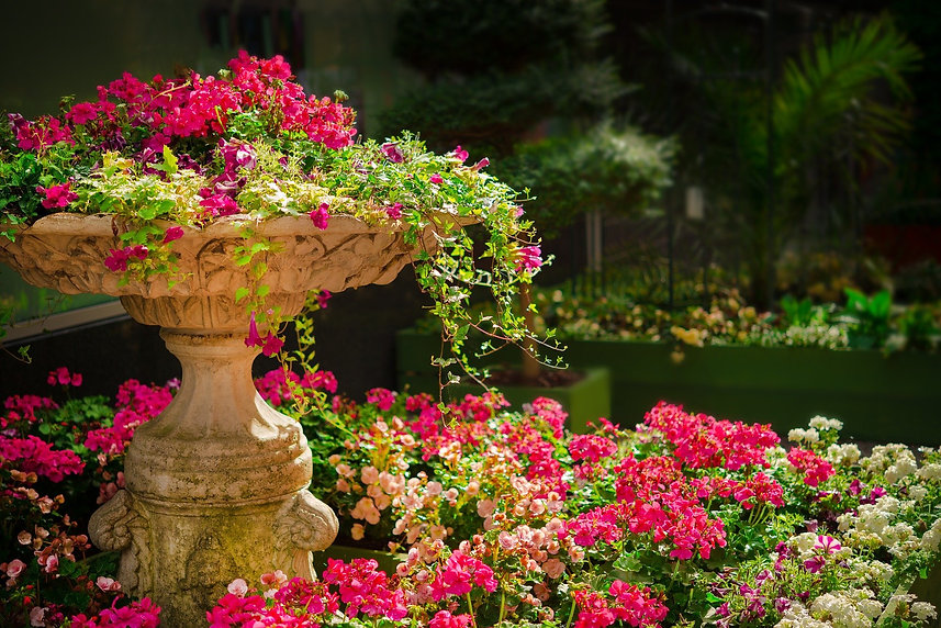 garden-670516_1920.jpg