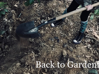 Garden Resolutions: No. 1 Back to Gardening