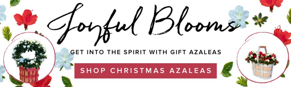 Holiday Florist Azaleas Banner - 800 x 2