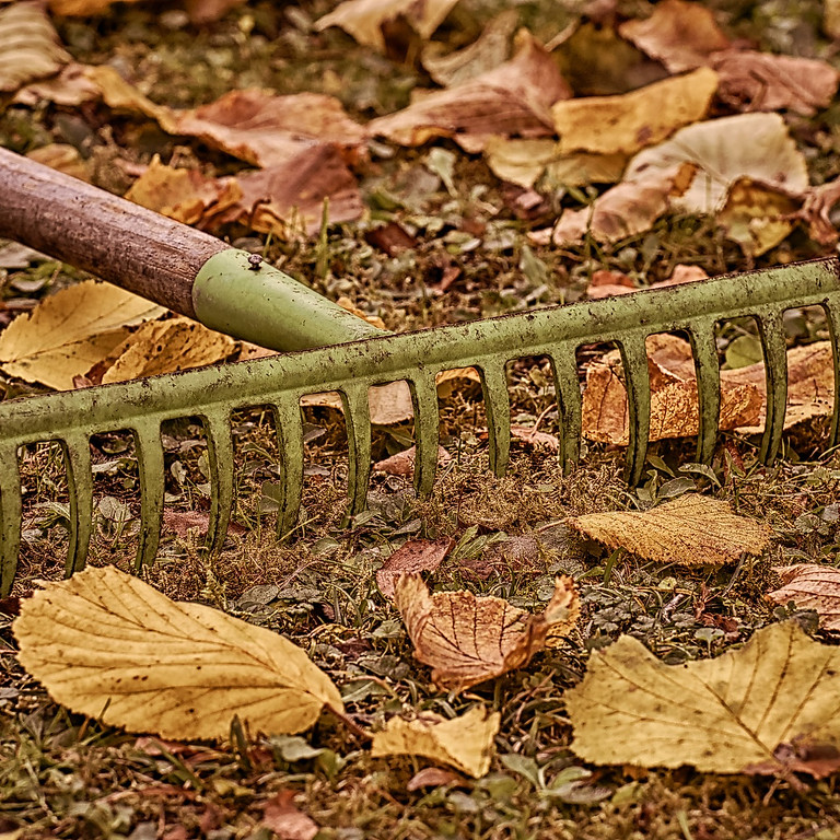 Fall into Planting